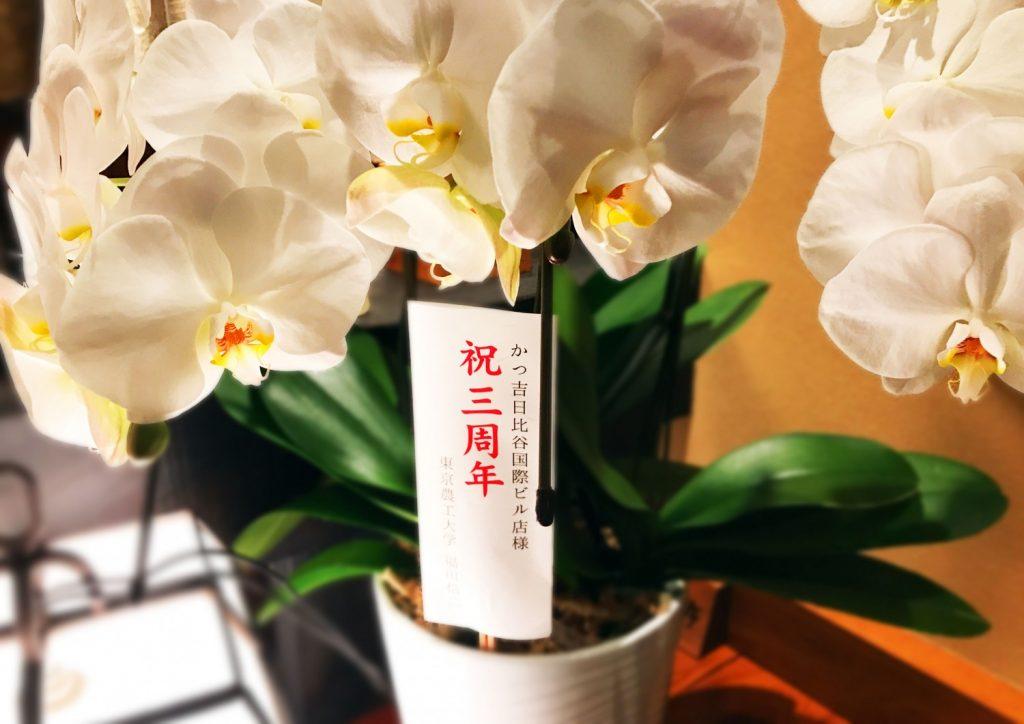 日比谷胡蝶蘭5